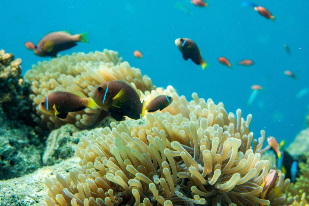 サンゴ礁の海の中
